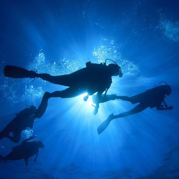 パラオ・ミクロネシア・モルディブ・フィリピンなどの海外ダイビングツアー&リゾートツアーなら信頼と実績のVacations21オアシスツアーセンターにお任せください